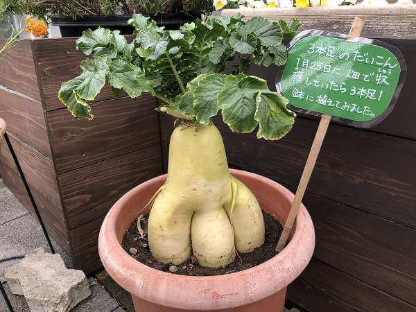 名古屋市農業センターdelaふぁーむ
