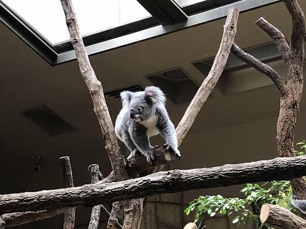 入場制限中の東山動物園